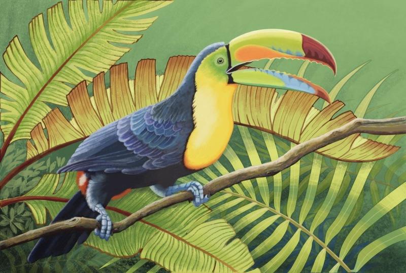 热带植物手绘
