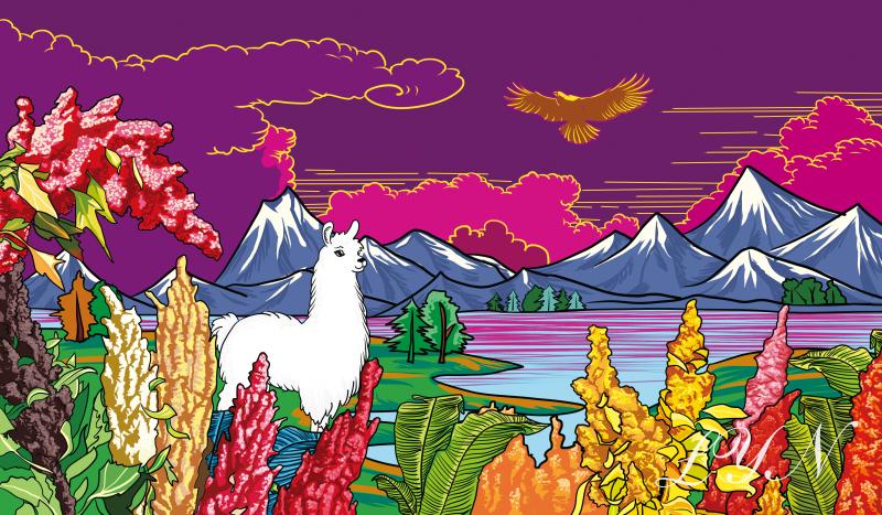藜麥包裝插畫設計