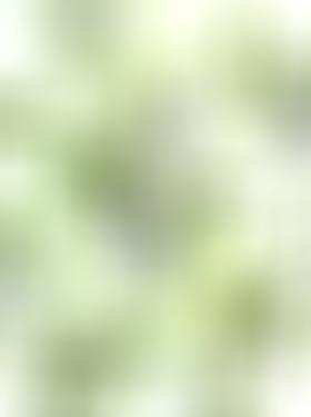 山谷百合花卉图案