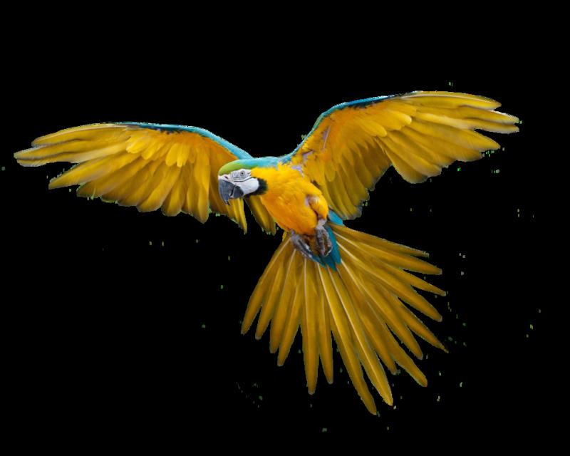 金刚鹦鹉图案设计
