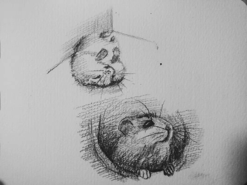 小仓鼠素描