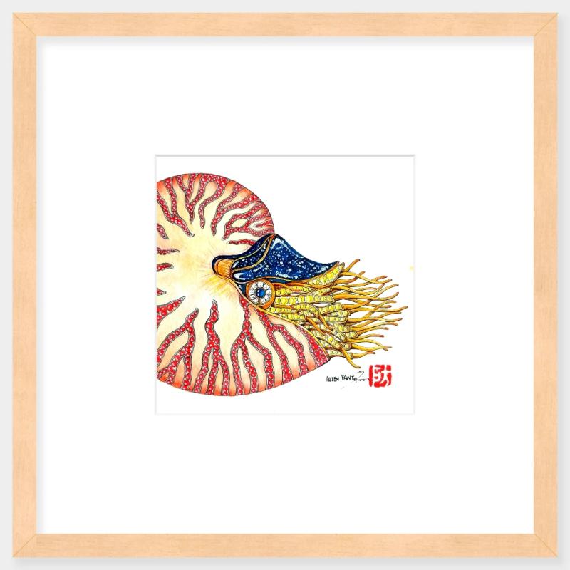 鹦鹉螺装饰画挂件