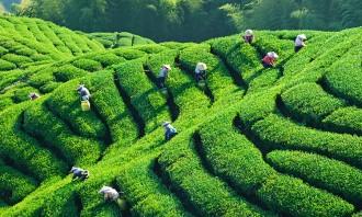 茶品VI策划中的文化元素