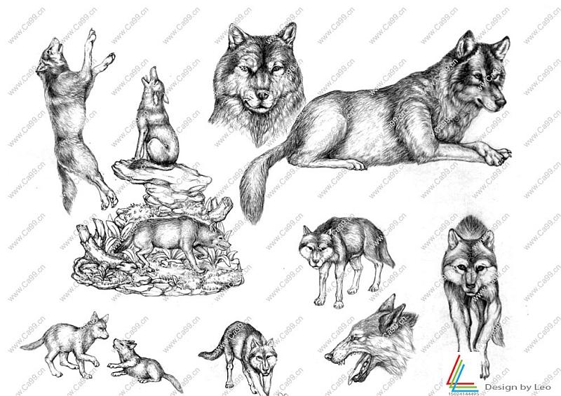 动物狼手绘原创-设计案例_彩虹设计网图片