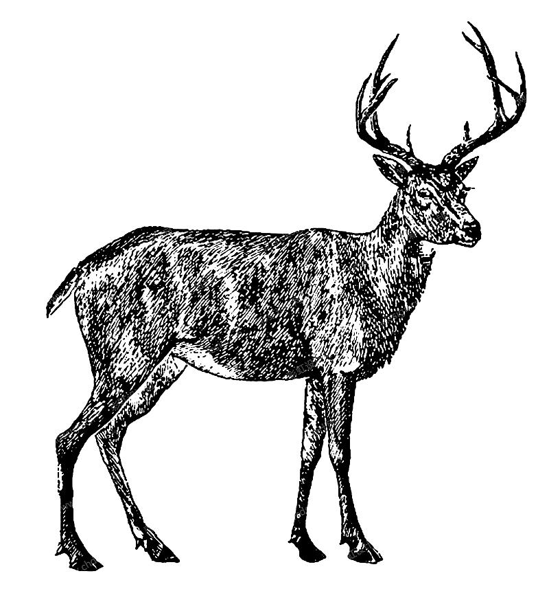 圣诞麋鹿黑白线条图案-设计案例_彩虹设计网图片