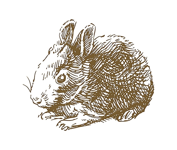 春天动物单色图案设计
