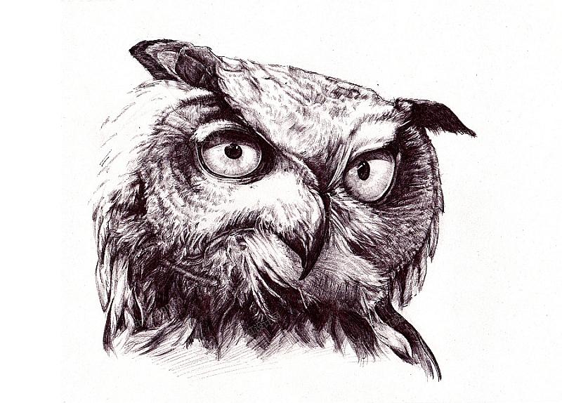 手绘猫头鹰