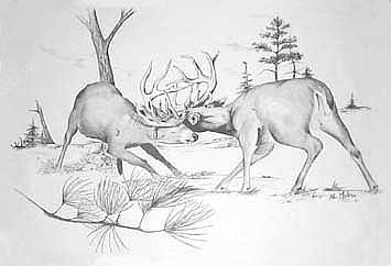 麋鹿手绘铅笔画简单
